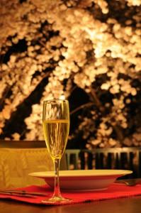 桜&シャンパン1-桜ぼかし-最も明るめ
