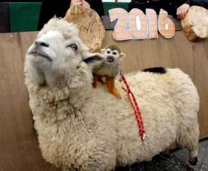アニマルキングダム 羊とサル
