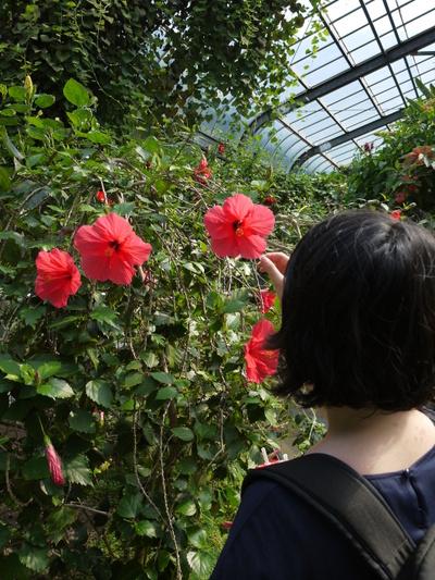 バナナワニ園 熱帯植物